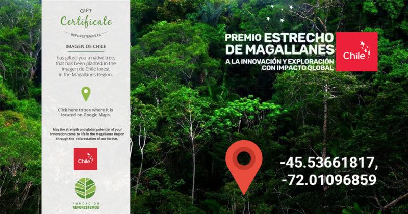 Obrázek strom v Chile